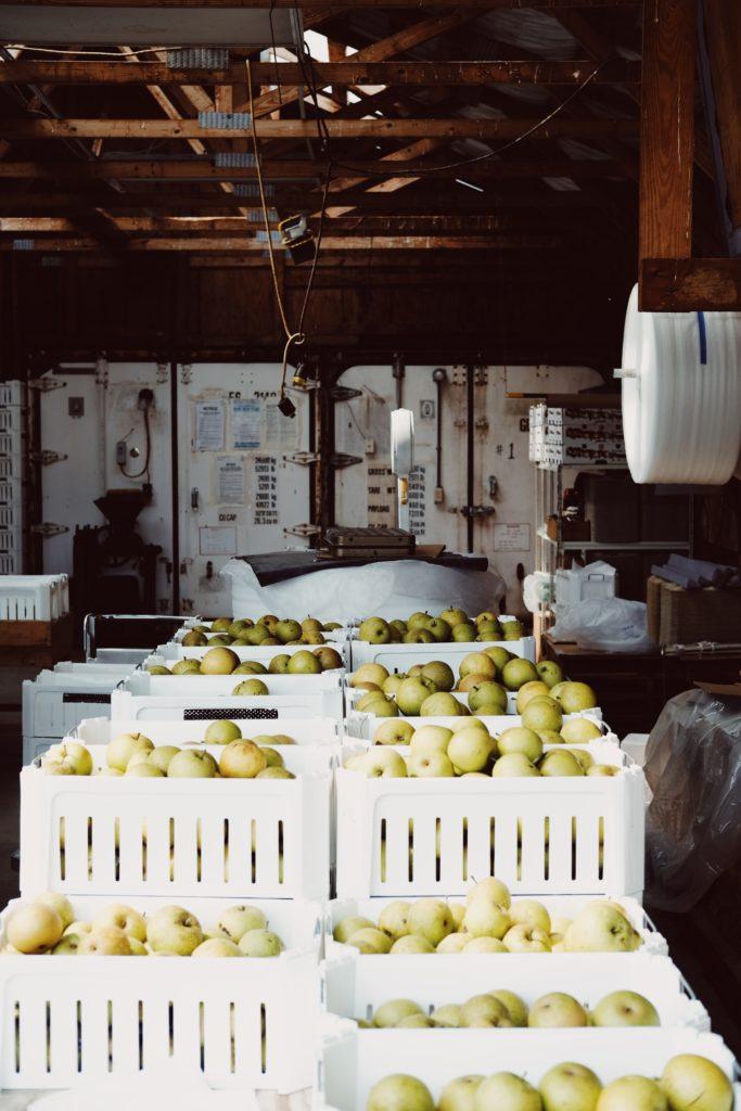Green Cider Apples